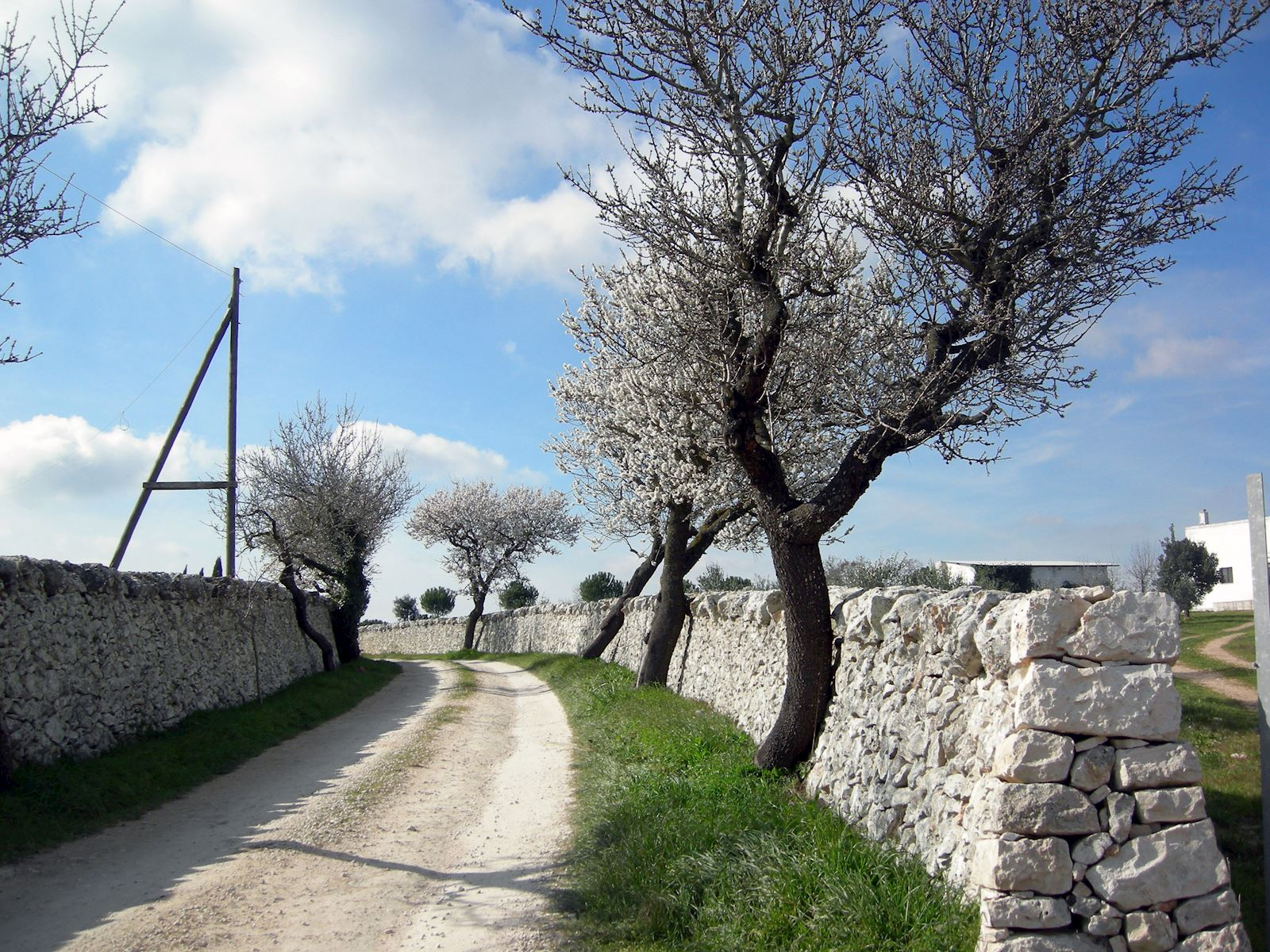 Italian Wine Tours - Travel Styles - Puglia